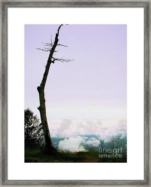 Reaching In The Shenandoah Framed Print