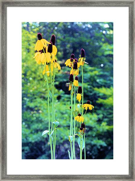 Reaching Up Framed Print by Jan Amiss Photography