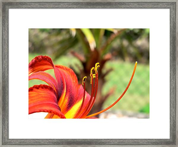 Reaching Upward Framed Print