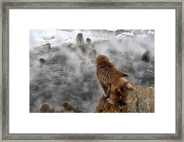 Ready For The Plunge Framed Print