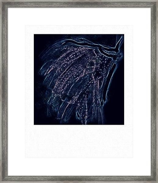 Reanimated  Framed Print