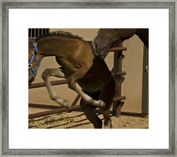 Framed Print featuring the photograph Rebellion by Catherine Sobredo
