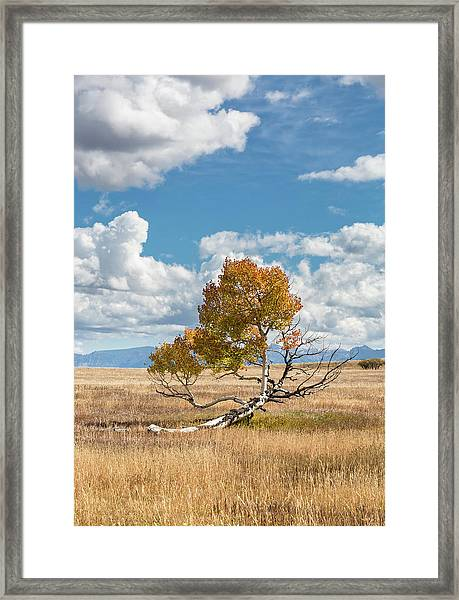 Reclining In The Sun Framed Print