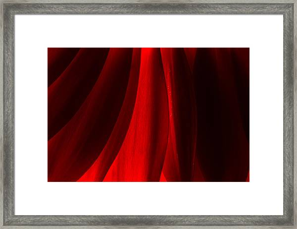 Red Abstract Of Chrysanthemum Wildflower Framed Print