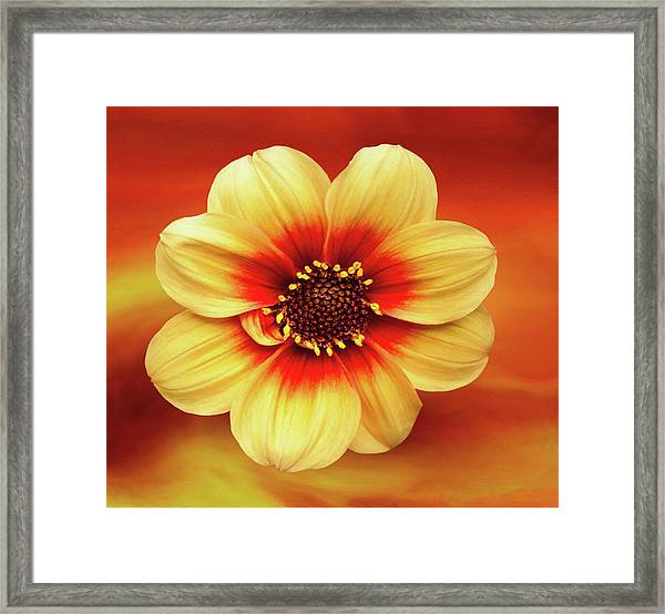 Red And Yellow Inspiration Framed Print