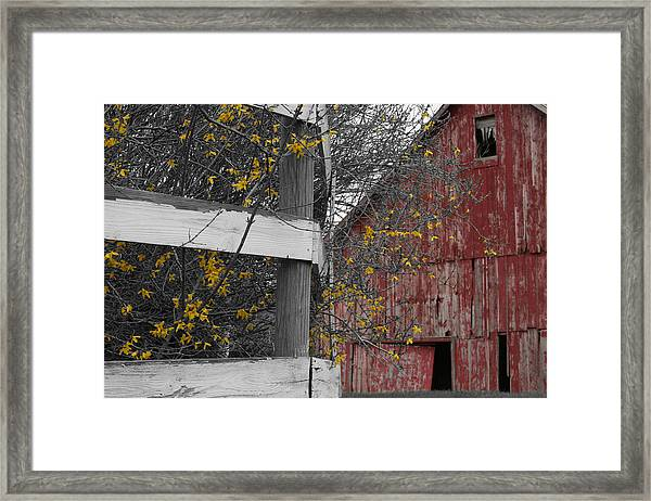 Framed Print featuring the photograph Red Barn And Forsythia by Dylan Punke