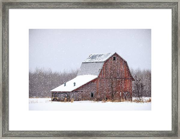 Red Beauty In Snow Framed Print