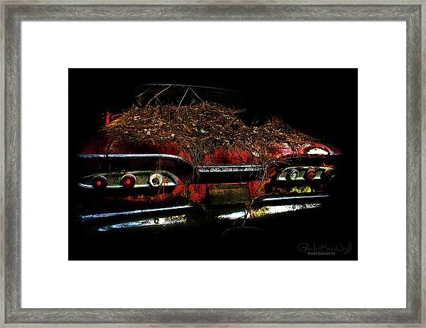 Framed Print featuring the photograph Red Belle by Glenda Wright