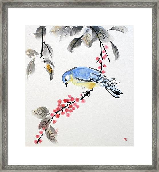 Red Berries Blue Bird Framed Print