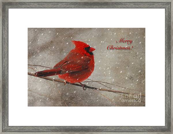 Framed Print featuring the photograph Red Bird In Snow Christmas Card by Lois Bryan