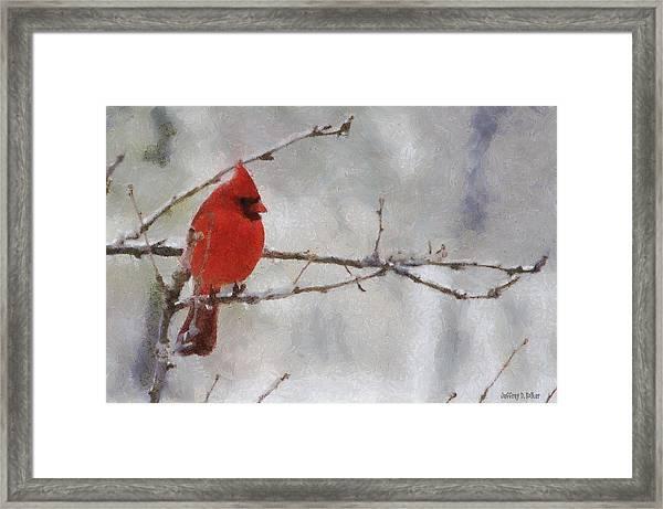 Red Bird Of Winter Framed Print