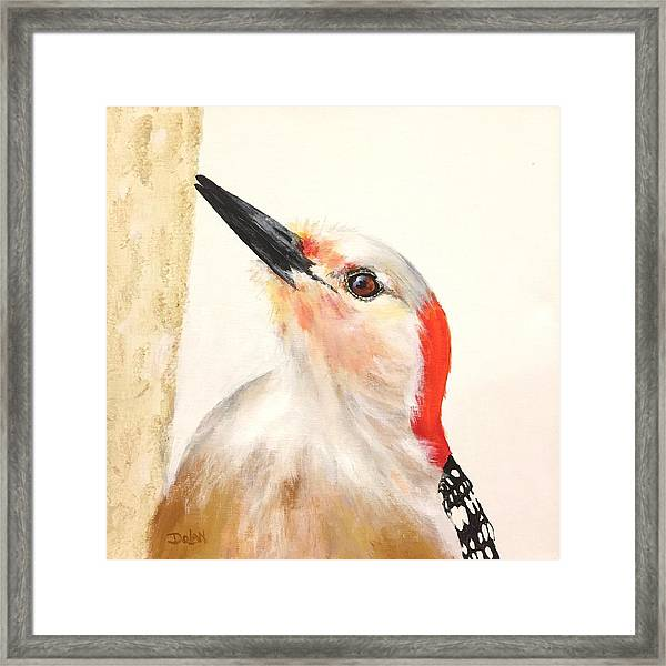 Red Breasted Woodpecker Framed Print