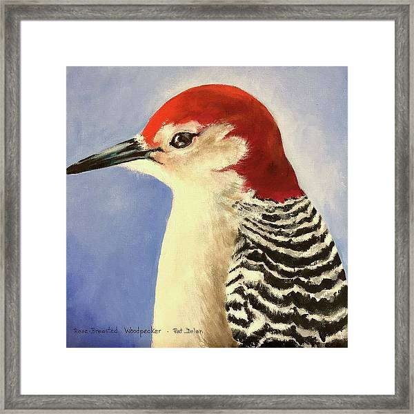Red Breasted Woodpecker Two Framed Print