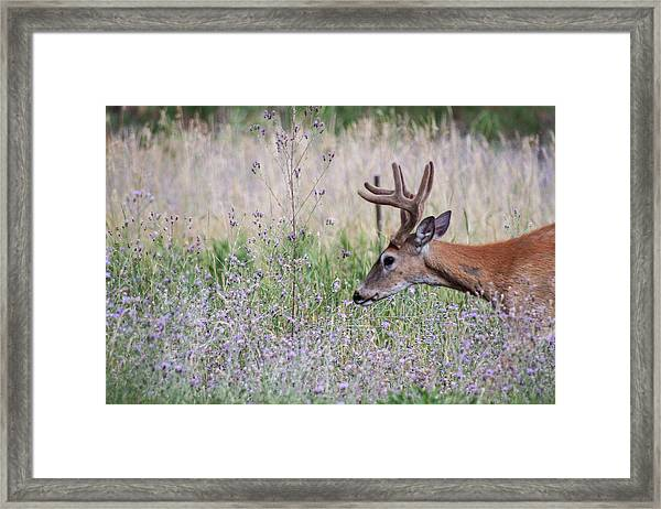 Framed Print featuring the photograph Red Bucks 4 by Antonio Romero