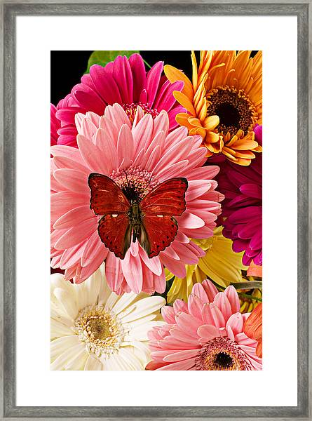 Red Butterfly On Bunch Of Flowers Framed Print