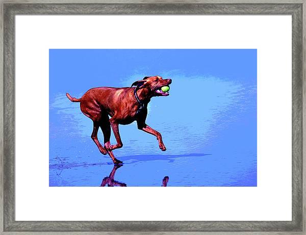Red Dog Running Framed Print