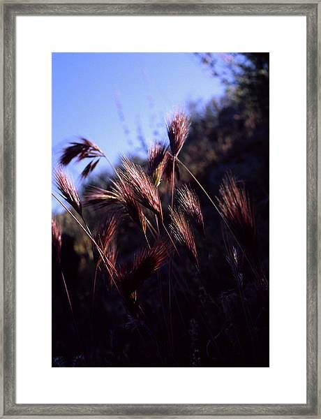 Red Feathers Framed Print