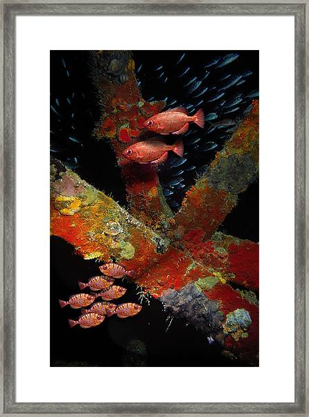Red Fish On The Rhone Framed Print