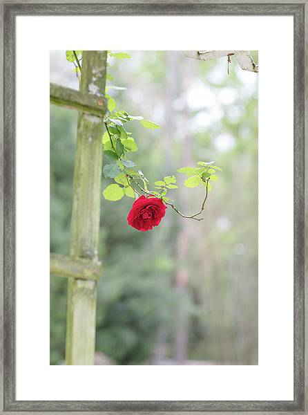 Red Flower Garden Framed Print