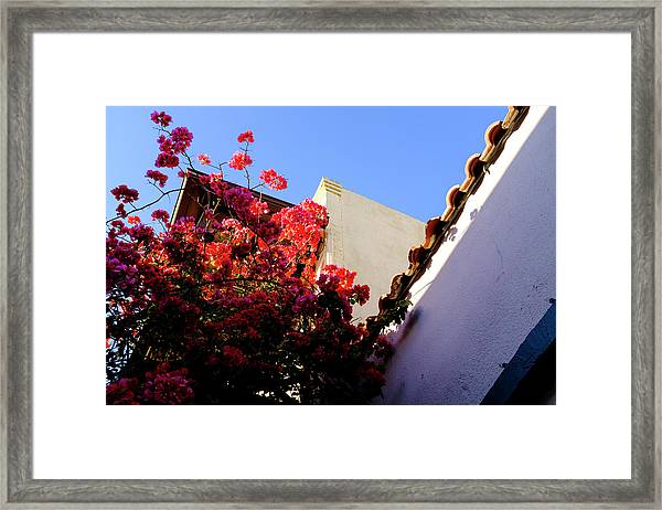 Red Flowers And Architecture In Saint Augustine Florida Framed Print