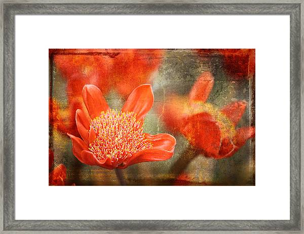 Red Flowers Framed Print by Larry Marshall