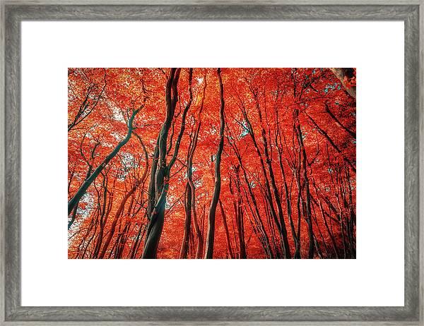 Red Forest Of Sunlight Framed Print