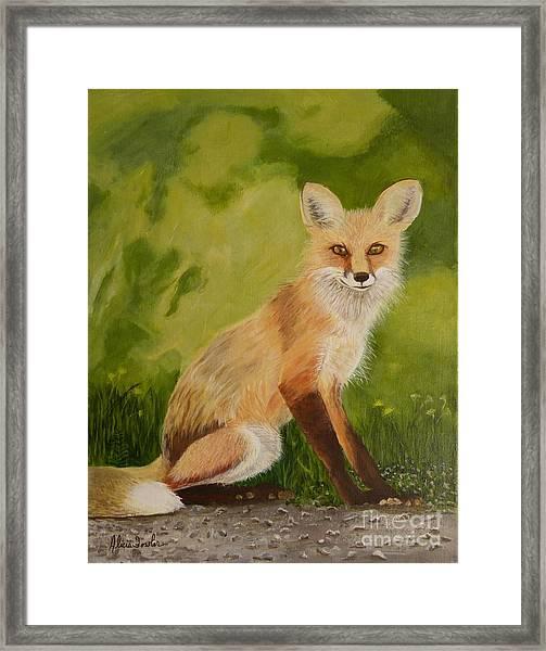 Red Fox 1 Framed Print
