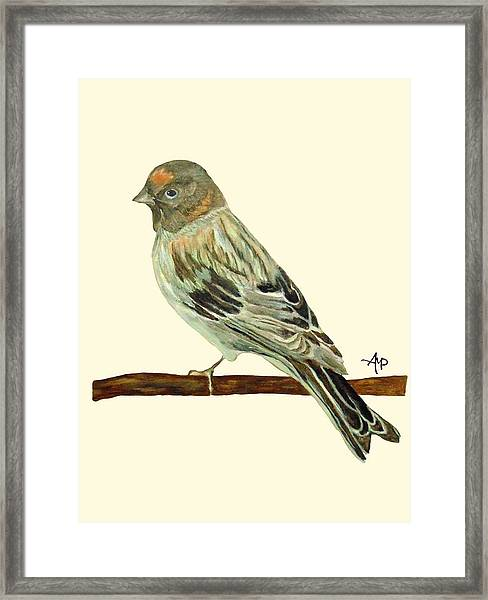 Red-fronted Serin Framed Print