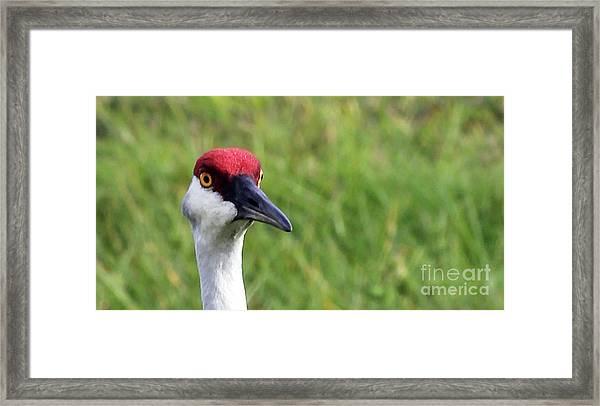 Red Headed Crane Framed Print