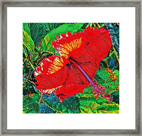 Red Hibiscus Aslant Framed Print