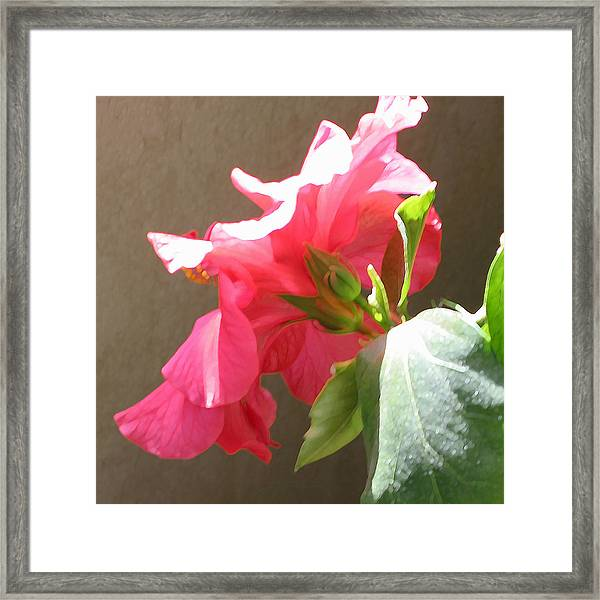 Red Hibiscus Beauty Framed Print