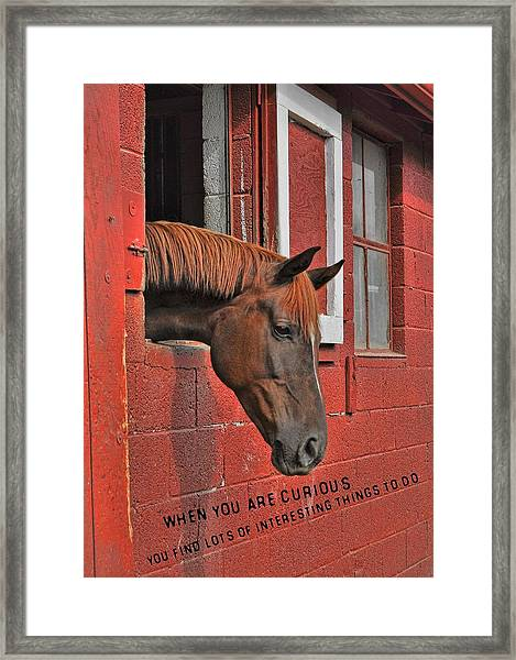 Red Horse Quote Framed Print