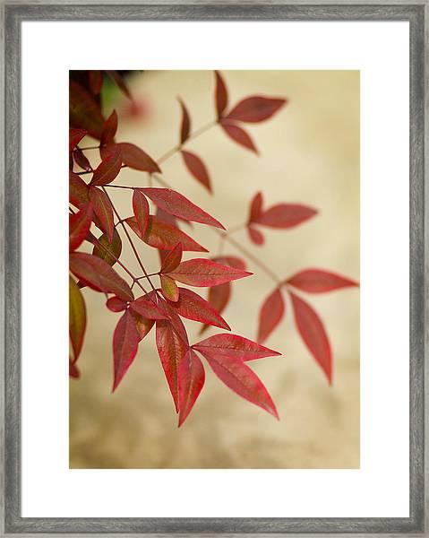 Red Leaves Framed Print