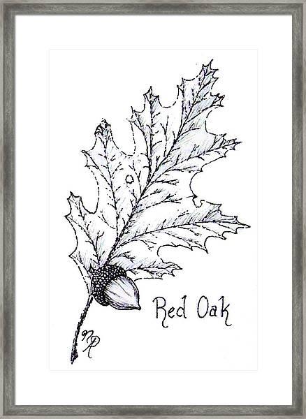 Red Oak Leaf And Acorn Framed Print
