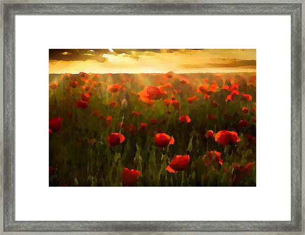 Red Poppies In The Sun Framed Print
