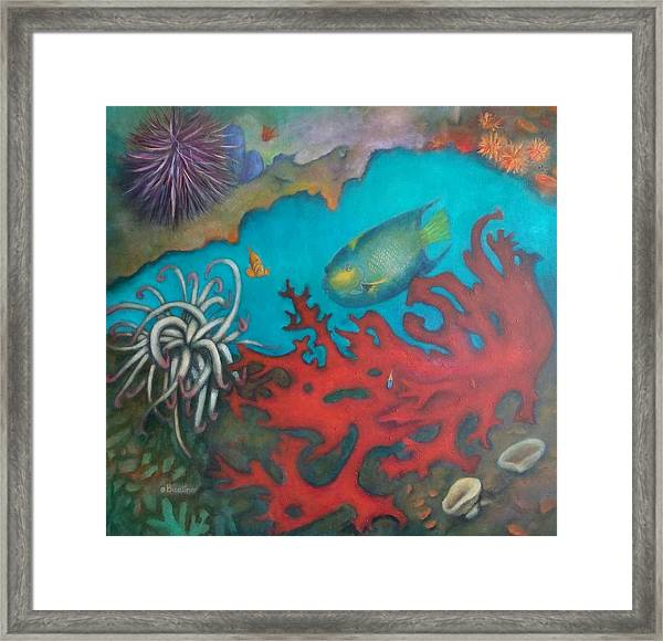 Red Reef Framed Print