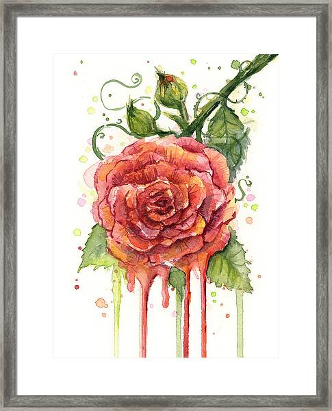 Red Rose Dripping Watercolor  Framed Print