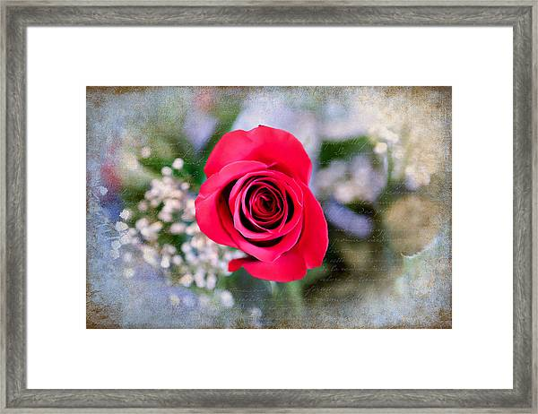 Red Rose Elegance Framed Print