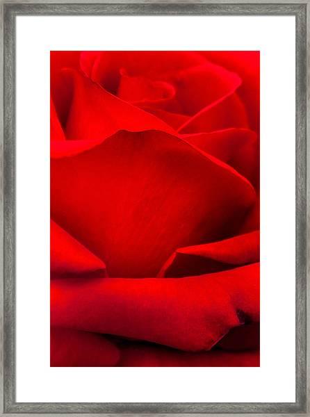 Red Rose Petals Framed Print