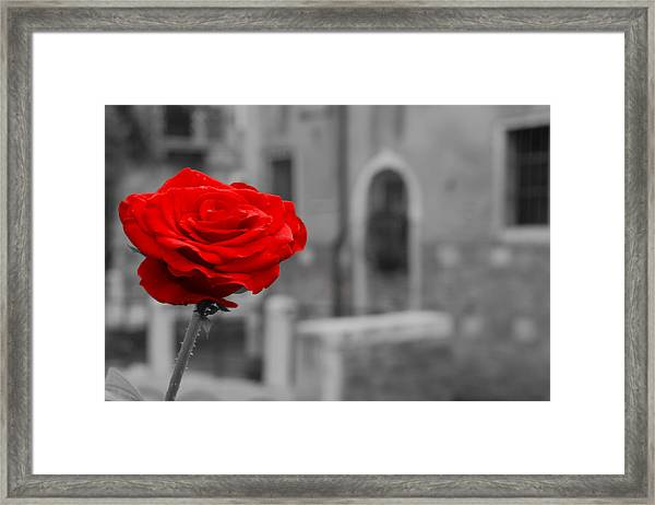 Red Rose With Black And White Background Framed Print by Michael Henderson