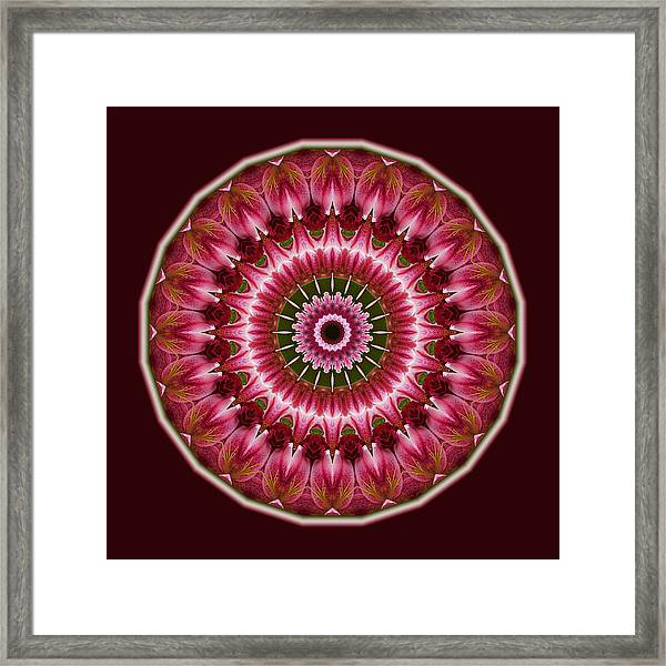 Red Roses And Thorns Framed Print