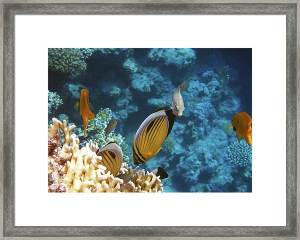 Red Sea Magical World Framed Print