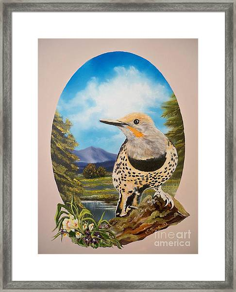 Flying Lamb Productions                       Red Shafted Flicker Framed Print