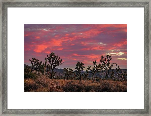 Red Sky Over Joshua Tree Framed Print