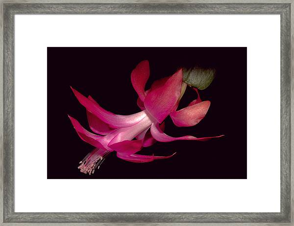 Red Framed Print by Stanislovas Kairys