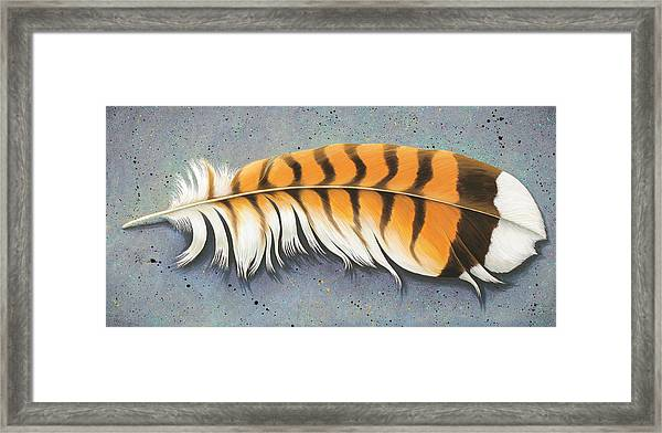 Red Tail Hawk Feather Framed Print