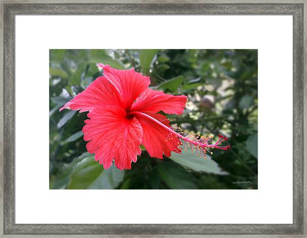 Red-tailed Flower Portrait Framed Print