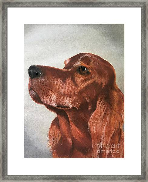 Red The Irish Setter Framed Print