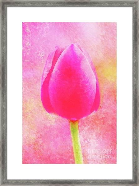 Red Tulip Dressed For Spring Framed Print