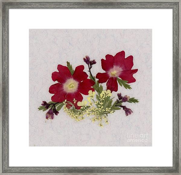 Red Verbena Pressed Flower Arrangement Framed Print